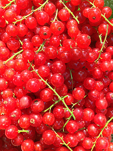 ríbezle, červená, Zelená, úroda, Príroda, Záhrada, o