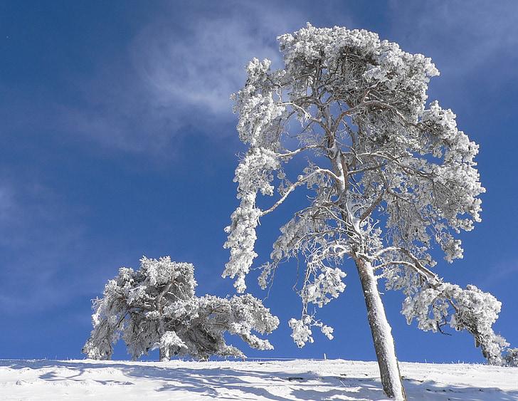 lumi, talvel, puu, jäävees, loodus, lumme, lumine
