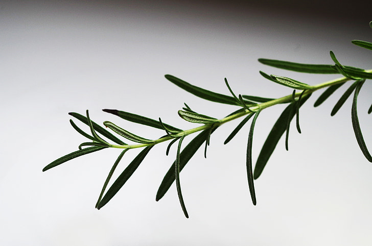 rosemary, herb, pepper, cooking, aromatic
