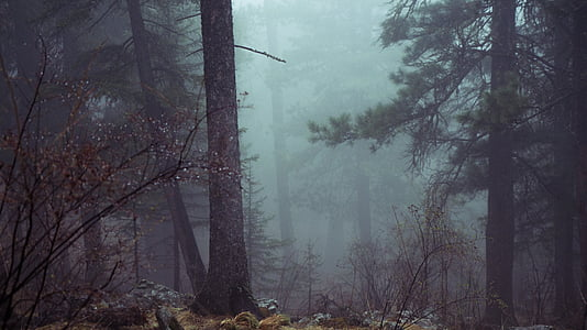 forest, trees, mystic, misty, atmospheric, scary, dark