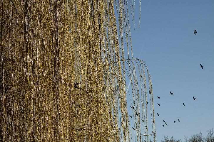 зимни, пасища, стадо от птици, природата, небе, птица, плаващи