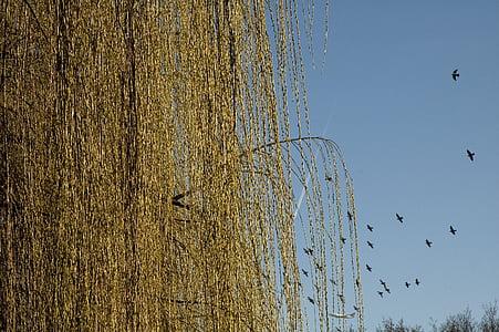 zimowe, pastwiska, stado ptaków, Natura, niebo, ptak, pływające