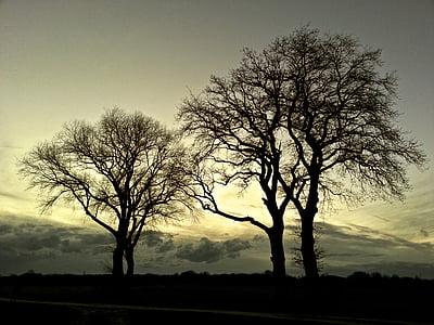 cây, cảnh quan, Thiên nhiên, tâm trạng, ánh sáng, rừng, mùa thu