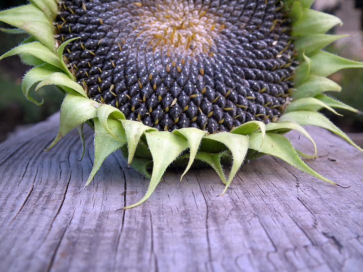 подсолнечник, Осень, Семена, фрукты, урожай, деревянные доски, лист