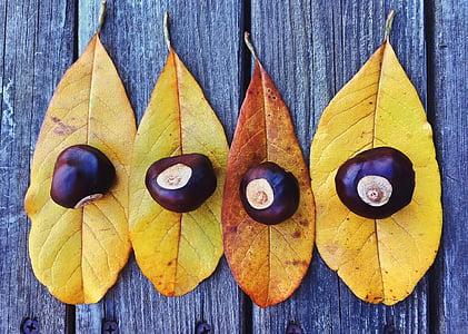 πτώση, το φθινόπωρο, φύλλα, σεζόν, φύλλο, πτώση φύλλα φόντο, ημέρα των ευχαριστιών