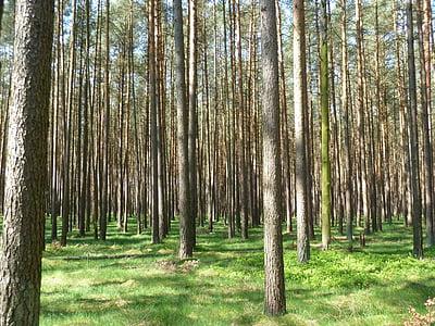 ป่า, ต้นไม้, ธรรมชาติ, baustamm, นางฟ้าป่า, เข้าสู่ระบบ