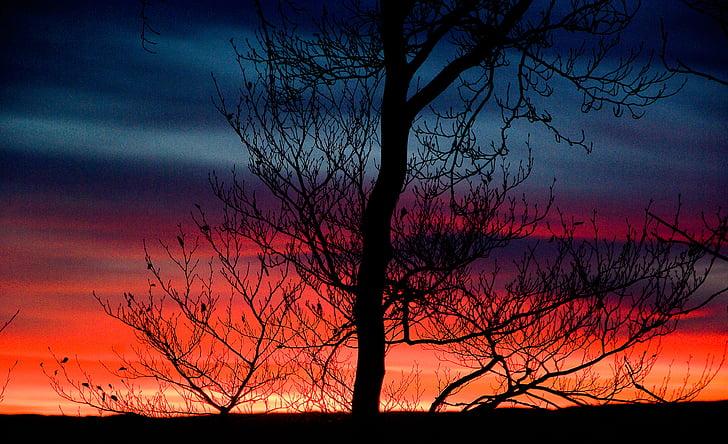 sunset, evening, twilight