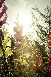 花, ガーデン, 草原, フローラ, 夏, イエロー, 赤い花