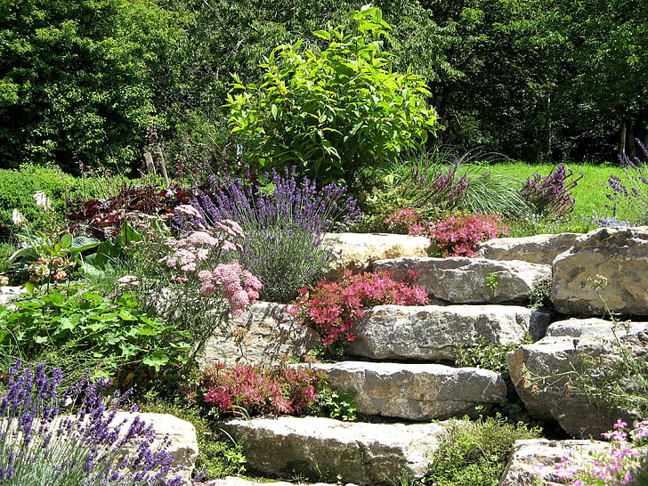 nature, stone garden, plant, stone wurz, succulent, houseleek, flower