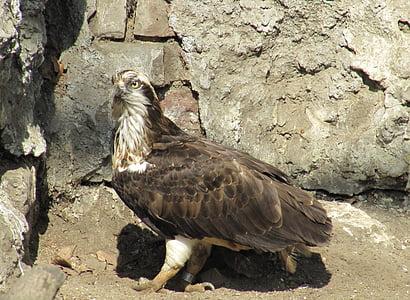 птица, Зоологическа градина, природата, дивите птици, дива природа, граблива птица, животните