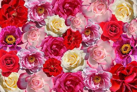 Roses, flors, l'amor, vermell, Rosa, natura, roses de jardí