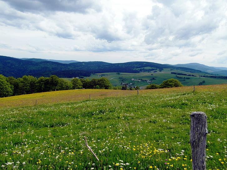 flower meadow, summer, summer meadow, flowers, black forest, sky, clouds
