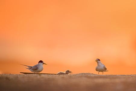 животните, птичи, плаж, птица, мъгла, зората, дневна светлина