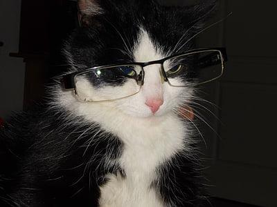 котка с очила, котка, хитри котка