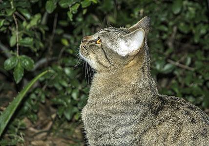 cat, pet, feline, kitten, cat face, feline stopped, pet animal