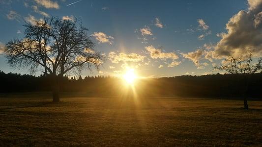 일몰, 태양 열, 태양, abendstimmung, 석양, 나무, 초원