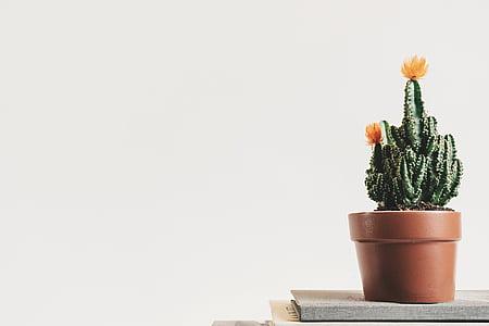 livro, botânicos, cacto, planta do cacto, close-up, decoração, delicado