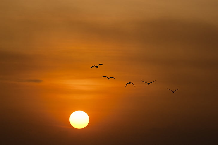 залез, море, слънце, птици, здрач, птица, природата