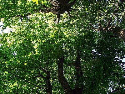 ağaç, Yeşil, Şube, estetik, yaprak, yaprakları, Renk
