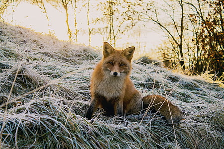 Natur, Wald, Wald, Tiere, Wild, Fuchs, Bäume