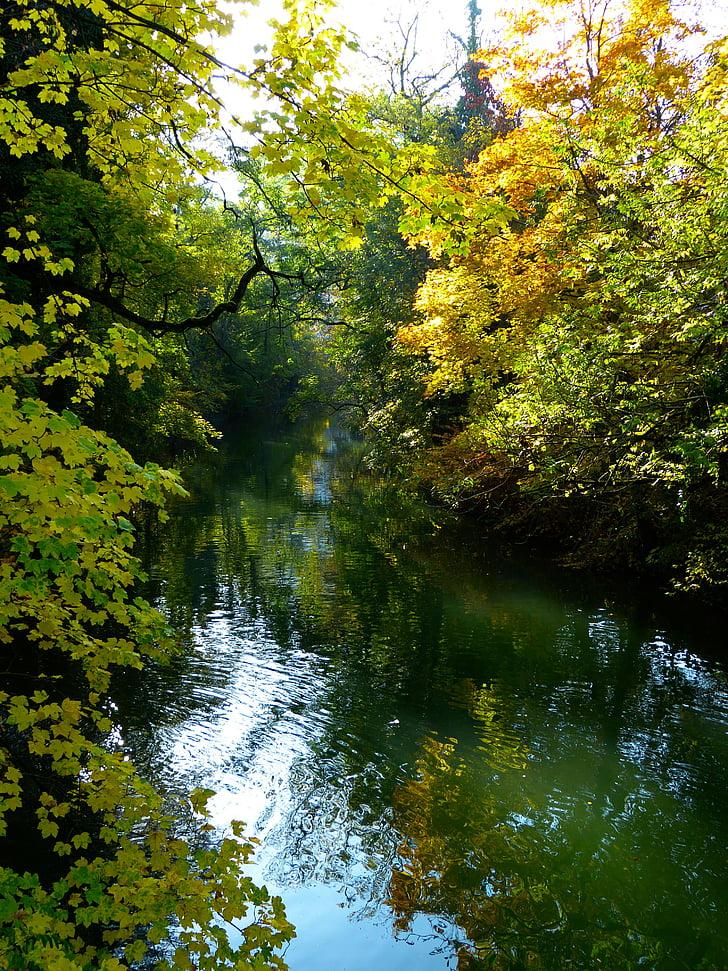 tardor, estat d'ànim tardor, arbre, l'aigua, Danubi, Banc