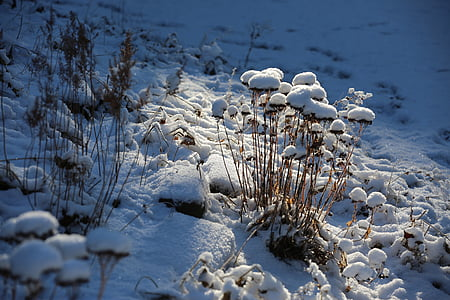 nature, winter, snow, wintry, winter cold, frost, cold - Temperature