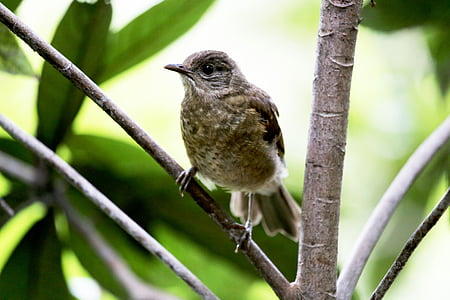 paige, bird, tropical, on the branch, wild, looking, small bird