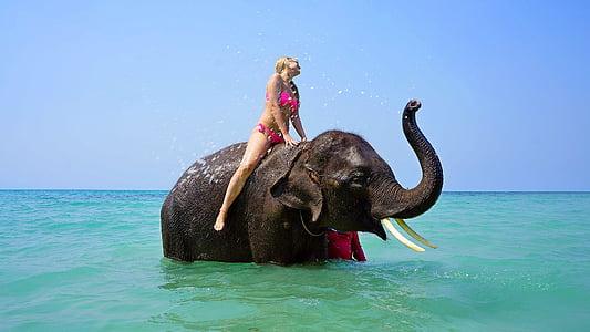 cavalcant sobre un elefant, bany, Mar, noia, viatges, vacances, l'aigua