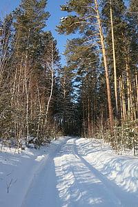 winter road, forest, winter, winter forest, trees, pine, winter landscape