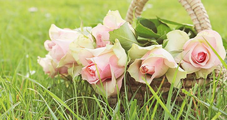 vrtnice, plemenito vrtnice, košara, cvetje, roza, roza vrtnice, roza dragoceni roden