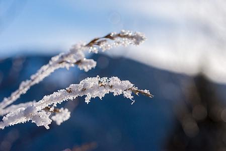 winter, snow, ice, wintry, white, cold, light