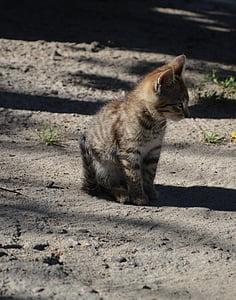 ζώο, γάτα, γατάκι, έναs νέος γατάκι