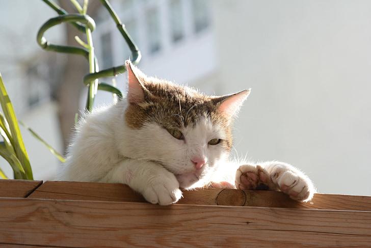 cat, istanbul, tabby cat, orange cat, potted the cat