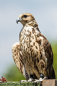 ptak, predator, animal, bird, bird of prey, one animal, animal wildlife
