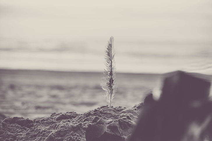 пляж, чорно-біла, Закри, Світанок, перо, Острів, краєвид