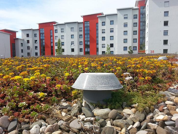 gulli, blanc, casa, coberta plana, ventilació, terrat verd, cobertes verdes extenses