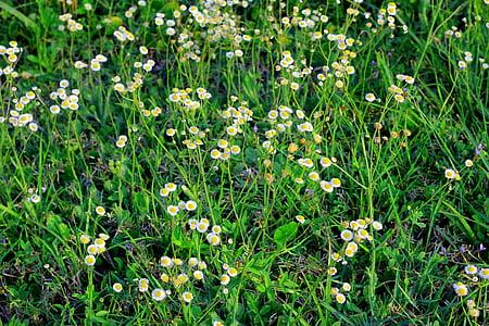 bloom, blossom, flora, flowers, grass, green, nature