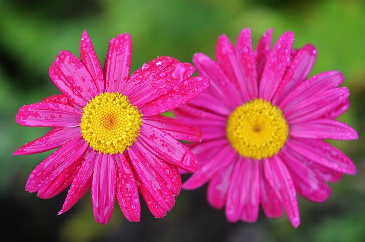 kvet, Natur, prírodné, letné, Zelená, rastlín, Kvetinová