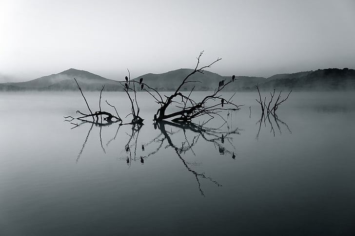nature reserve, africa, lake, silent, rest, water, landscape