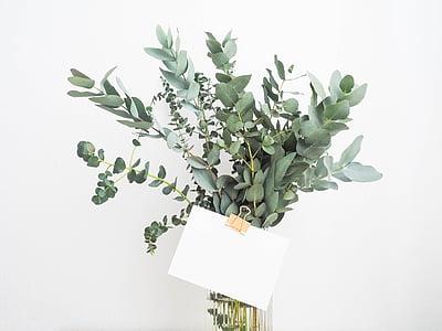 Yeşil, yaprak, bitkiler, iç, çiçek, cam, su