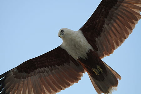 bird of prey, bird, animal world, wing, fly