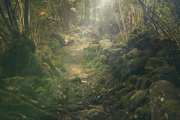 bosc, camí, mística, roques, conte de fades, llum del sol, verd