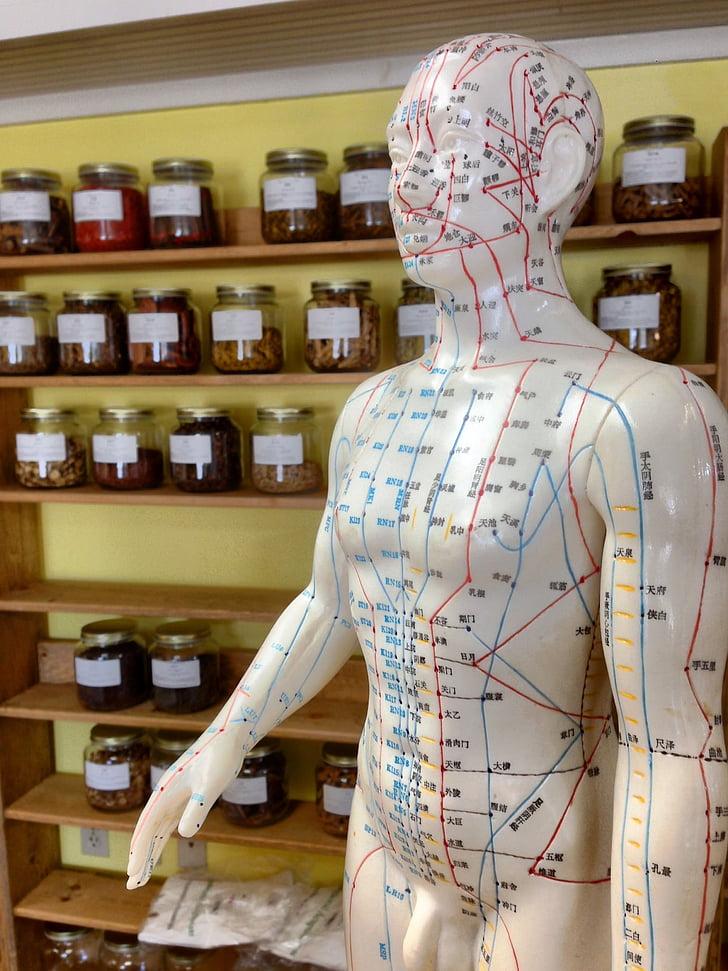 l'acupuntura, herbes, alternativa, homeopatia, xinès, benestar, tractament