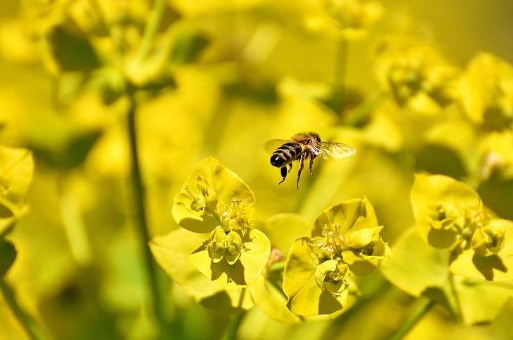 Hoa, mùa hè, màu vàng, con ong, côn trùng, Thiên nhiên, Sân vườn