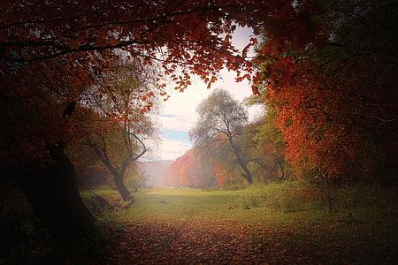 nature, forest, light, natural, landscape, outdoor, season