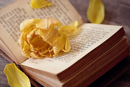 tulip, flower, yellow orange, blossom, bloom, petals, book