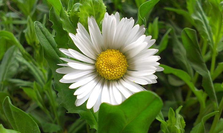cvijeće, priroda, cvijet, krupne
