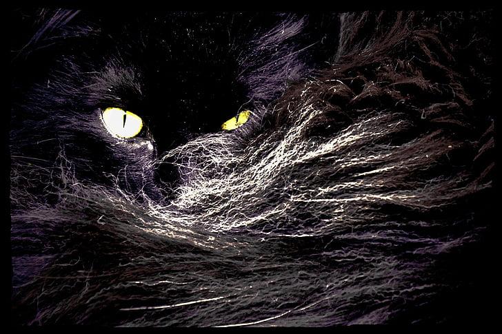 cat, cat's eyes, norwegian, cat fur