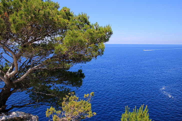 wallpaper, sea, blue, vegetation, blue sea, water, scenics