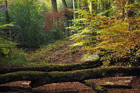 jesień, Natura, drzewa, krajobraz, lasu, Farbenspiel, pozostawia